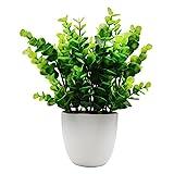 offidix Mini Kunststoff Eukalyptus Künstliche Pflanzen mit Vase für Schreibtisch, Home und Friends 'Geschenk Fake Anlage mit Plastik Töpfe für Home Dekoration (für große)
