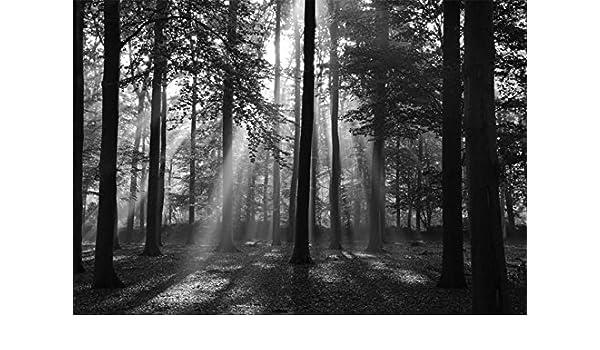 06P -350x260cm-7 Bahnen-Kleister-Digitaldruck-Wald Fototapete-WALDLICHTUNG-