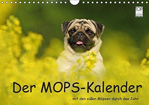 Der MOPS-Kalender (Wandkalender 2019 DIN A4 quer): ... mit den süßen Möpsen durch das Jahr (Monatskalender, 14 Seiten ) (CALVENDO Tiere)