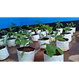 Rochfern Grow Bag LARGE ,100% Virgin Polyethylene, (24 X 24 X 40 Cms.)(Set Of 15) Portable .UV Treated, Perfect For Terrace, Balcony, Kitchen Vegetables Garden, Flats, Or Any Small Spaces Good Looking White Outside ,Black Inside -for Best Root Development