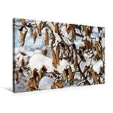 Premium Textil-Leinwand 75 cm x 50 cm quer, Trockene Buchenblätter im Schnee | Wandbild, Bild auf Keilrahmen, Fertigbild auf echter Leinwand. Buchenhecke in einem Park. (CALVENDO Natur)