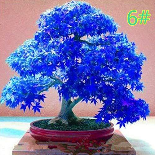 Kofun Lot de 20 Pots de Fleurs Japonais en érable Saatgut Bonsai DIY - Pots colorés - pour la Maison - Mini - Jardin - Décoration 15