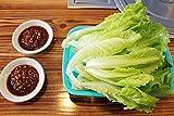 Pinkdose 100 Stück, Eisbergsalat Lactuca Sativa Gemüse Bonsais, gepflanzt Freies Verschiffen Luftblasenbeutel Boden Little Garden