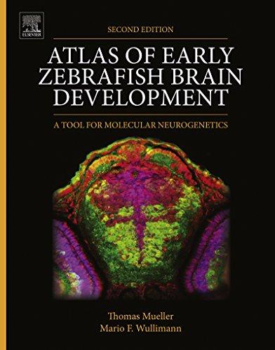 Atlas of Early Zebrafish Brain Development: A Tool for Molecular Neurogenetics (English Edition)