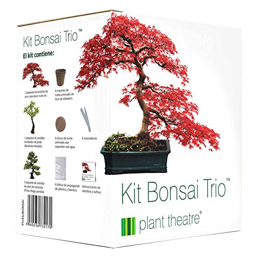 Plant Theatre Kit Bonsai Trio - 3 árboles de Bonsai distintivos para crecer.
