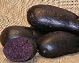 Sycamore Trading VIOLETTA Seed Potatoes x 10 Tubers. An early main-crop variety Violetta potatoes have smooth dark blue or purple skin and dramatic dark blue flesh.