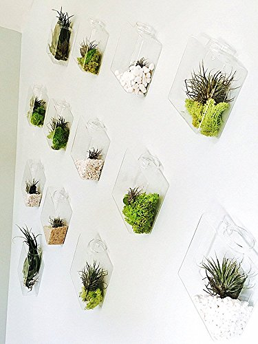 Newdreamworld, set di 9a rombi da parete in vetro vaso/fioriere da parete per interni/radici piante in acqua sulla parete/tv da parete decorazioni/regalo natalizio