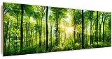 Feeby, Wandbild, Deco Bild, Gedrucktes Bild, Deco Panel, Bild, Panoramabild 69x158 cm, Wald, BÄUME, Sonne, Natur, GRÜN