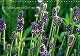 Heilpflanzen im Garten (Wandkalender 2016 DIN A4 quer): Attraktive Blüten und Blätter mit medizinischer Wirkung (Monatskalender, 14 Seiten) (CALVENDO Gesundheit)