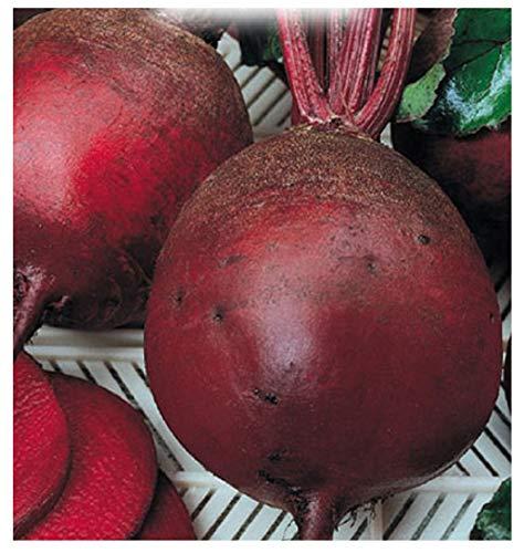 inception pro infinite 350 c.ca semi barbabietola da orto detroit 2 - beta vulgaris in confezione originale prodotto in italia - barbabietole