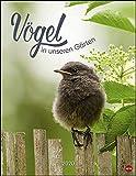 Vögel in unseren Gärten Posterkalender 2020 34x44cm