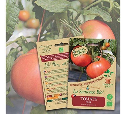 Tomate 1884 semence bio