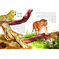 I-colori-della-natura-Ediz-illustrata