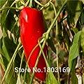 Gemüsesamen Habanero orange Paprika-Pfeffer-Samen Pflanze - 100 Stück - extrem heiß! von SVI bei Du und dein Garten