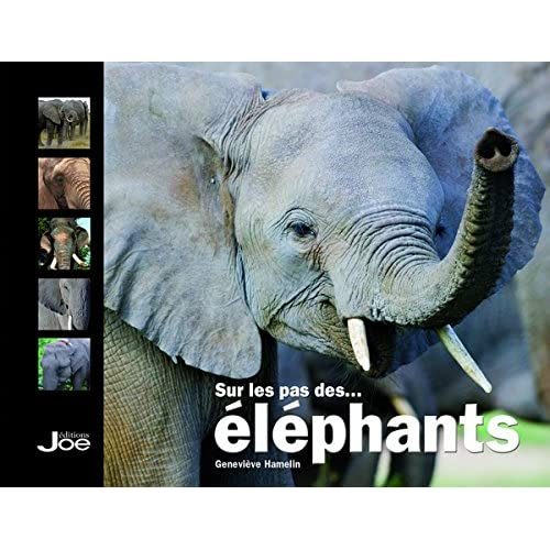 Sur les pas des éléphants