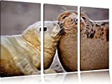 süße Robben kuscheln3-Teiler Leinwandbild 120x80 Bild auf Leinwand, XXL riesige Bilder fertig gerahmt mit Keilrahmen, Kunstdruck auf Wandbild mit Rahmen, gänstiger als Gemälde oder Ölbild, kein Poster oder Plakat