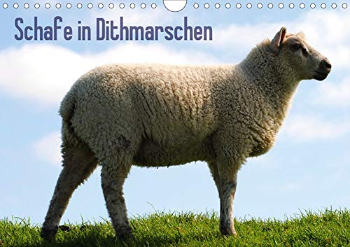 Schafe in Dithmarschen (Wandkalender 2020 DIN A4 quer)