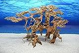 Bonsai Baum XL Wurzel Holz Aquarium Deko Aquascaping Wurzel original Foto Nr.621