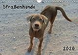 Straßenhunde 2020 (Wandkalender 2020 DIN A4 quer): Liebenswerte Straßenhunde (Monatskalender, 14 Seiten ) (CALVENDO Tiere)