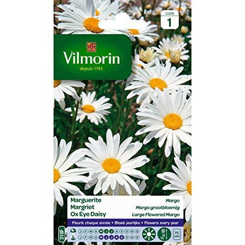Vilmorin - Sachet graines Grande marguerite Margo