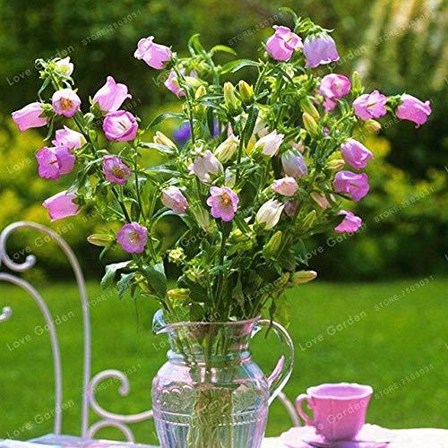 Pinkdose Blume Abutilon Pictum Bonsai Abutilon Striatum Dickson Bonsai 30 Stück Garten-Bonsai Blumen-Bonsai Einfach zu züchten Campanula: 4