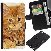 EuroCase - Apple Iphone 6 PLUS 5.5 - maine coon ginger orange garfield cat - Cuero PU Delgado caso cubierta Shell Armor Funda Case Cover