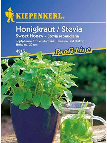 Stevia rebaudiana Süsskraut Honigkraut Sweet Honey