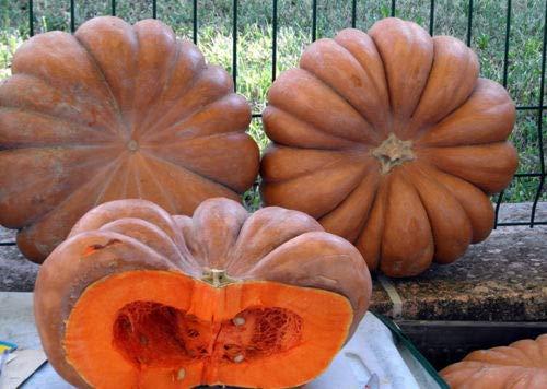 Portal Cool Samen Kürbis Muscat De Provence Riesen Gemüse Bio-Heirloom Russland Ukraine