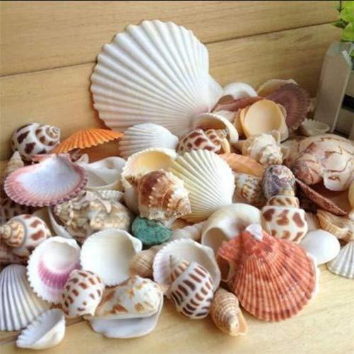 mischt Strand Muscheln, Bunte natürliche Muscheln perfekte Akzente für die Kerzenherstellung, Strand Thema Party Hochzeit Dekor, DIY Handwerk, Aquarium und Vase Füllstoffe ()