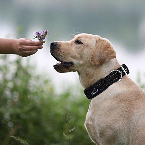 Hundehalsbänder Reflektierend, PETBABAB Gepolstert Verstellbar Nylon Training Hunde Halsband für Hunde Schwarz - 3