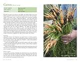 Veg Patch: River Cottage Handbook No.4