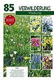 Quedlinburger Blumenzwiebelmischung Verwilderung, bunter Mix aus farbenfrohen Frühjahrsblühern, 255 Stück