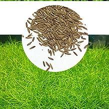 Zantec Semillas de plantas de acuario Decoración de hierba de agua acuática como Planta de primer