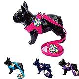 Lushpetz Flower Hundegeschirr mit passender Leine Set in rosa schwarz blau oder violett für kleine XSmall Hunderassen