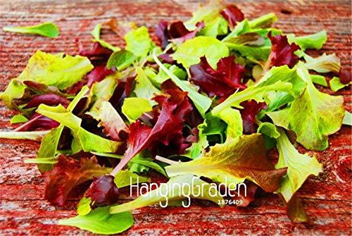 AGROBITS 100 PC/Beutel-Verkaufs-Hits! Mesclun Mix Bonsai, Alle Salat Salat-Mix, leicht Gemüsegarten wachsen