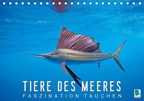 Tiere des Meeres: Faszination Tauchen (Tischkalender 2019 DIN A5 quer): Haie, Wale, Delfine: Tauchen Sie ab in die blaue Tiefe (Monatskalender, 14 Seiten ) (CALVENDO Tiere)