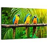 Cuadro sobre lienzo - de una sola pieza - Impresión en lienzo - Ancho: 70cm, Altura: 50cm - Foto número 2696 - listo para colgar - en un marco - AA70x50-2696