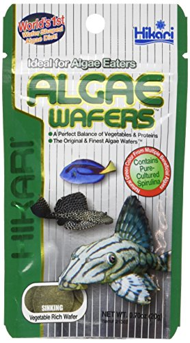HIKARI Tropical Algae Wafers | 20g | Aquarium Fish Food