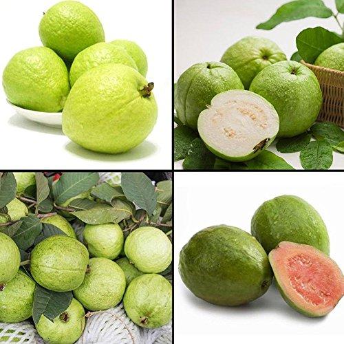 Clifcragrocl semi 50 pz guava semi psidium guajava tropical fruit plant home garden albero bonsai