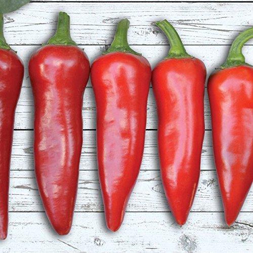 Portal Cool 10 - Samen: Flaming Flare F1 Hybrid Hot Pepper Seeds - In Saucen, Salsa, Stir-Fries usw. verwendet