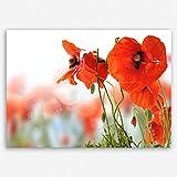 !!! SENSATIONSPREIS !!! ge Bildet hochwertiges Leinwandbild - Mohn - 30 x 20 cm einteilig | angebote der woche geschenke für frauen geschenke für männer | 2208 D