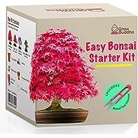 Züchte dein eigenes Bonsai - Züchte einfach 4 Arten von Bonsai-Bäumen mit unserem kompletten, anfängerfreundlichen Starter-Samen-Set - Einzigartige Geschenkidee