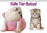 Süße Tier-Babys! (Wandkalender 2019 DIN A4 quer): Kleine Herzensbrecher für die ganze Familie (Monatskalender, 14 Seiten ) (CALVENDO Tiere)