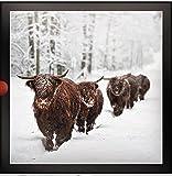PH-XLDB0058 Foto-Weihnachtskarten, Motiv Rind aus der Dark Room Reihe, 16 Karten, Fotodruck mit Flitter-Finish