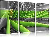 grüne Aloe Vera Pflanze schwarz/weiß 3-Teiler Leinwandbild 120x80 Bild auf Leinwand, XXL riesige Bilder fertig gerahmt mit Keilrahmen, Kunstdruck auf Wandbild mit Rahmen, günstiger als Gemälde oder Ölbild, kein Poster oder Plakat