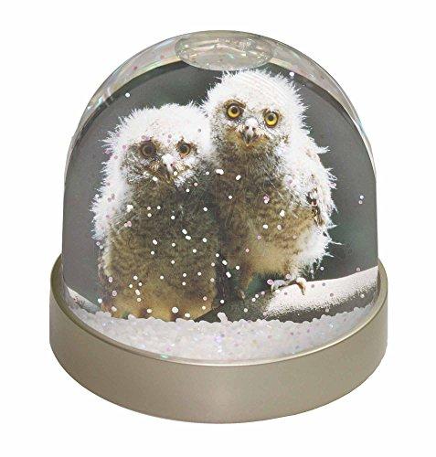 Schneekugeln Eule (Advanta Eule Baby Küken Schneekugel Snow Dome Geschenk, mehrfarbig, 9,2x 9,2x 8cm)