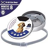 Goldyqin Collare per Cani Pet Anti Anti-pulci zecche zecche Collari Anti-repulsione per Insetti Protezione Acari Collari Impermeabili Regolabili - Grigio