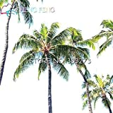 Shopmeeko 2016 30 Stück Blue Palm Varietà Bonsai FAI Te Haus Garten Deko Garten Garten Gigante Cycas Baum Pflanze Versand Gratis: Blau