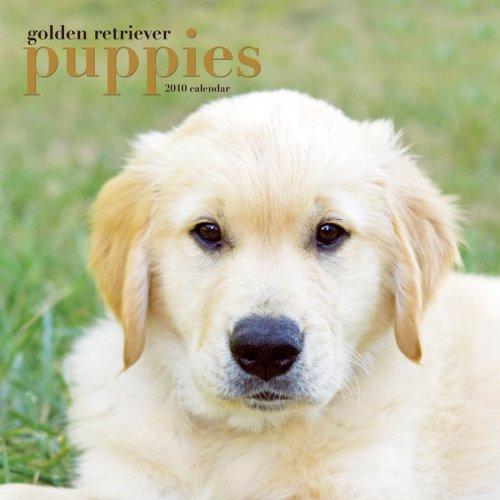 Golden Retriever Puppies 2010 Calendar -