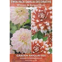 Dahlia Lot de 2–Motif à rayures et wittem Duo de lampes de fleurs d'été–Ampoules